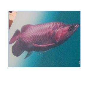 Golden Aquarium Thiruvananthapuram Kerala India