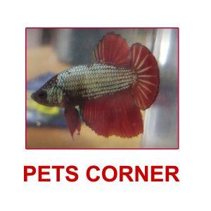 Pets Corner (Pigeon) Alappuzha Kerala India