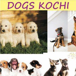 Dogs Kochi Kaloor Ernakulam Kerala India