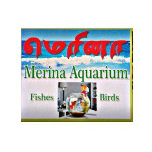 Merina Pets Tiruppur Tamil Nadu India