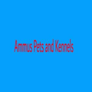 Ammus Pets and Kennels Hyderabad Telangana India